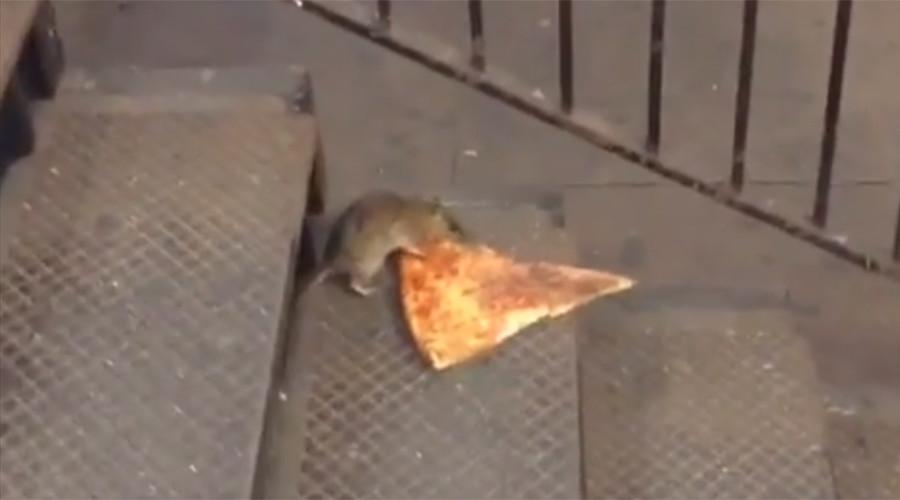 Que se cuide el Papa de las ratas en NYC (video)