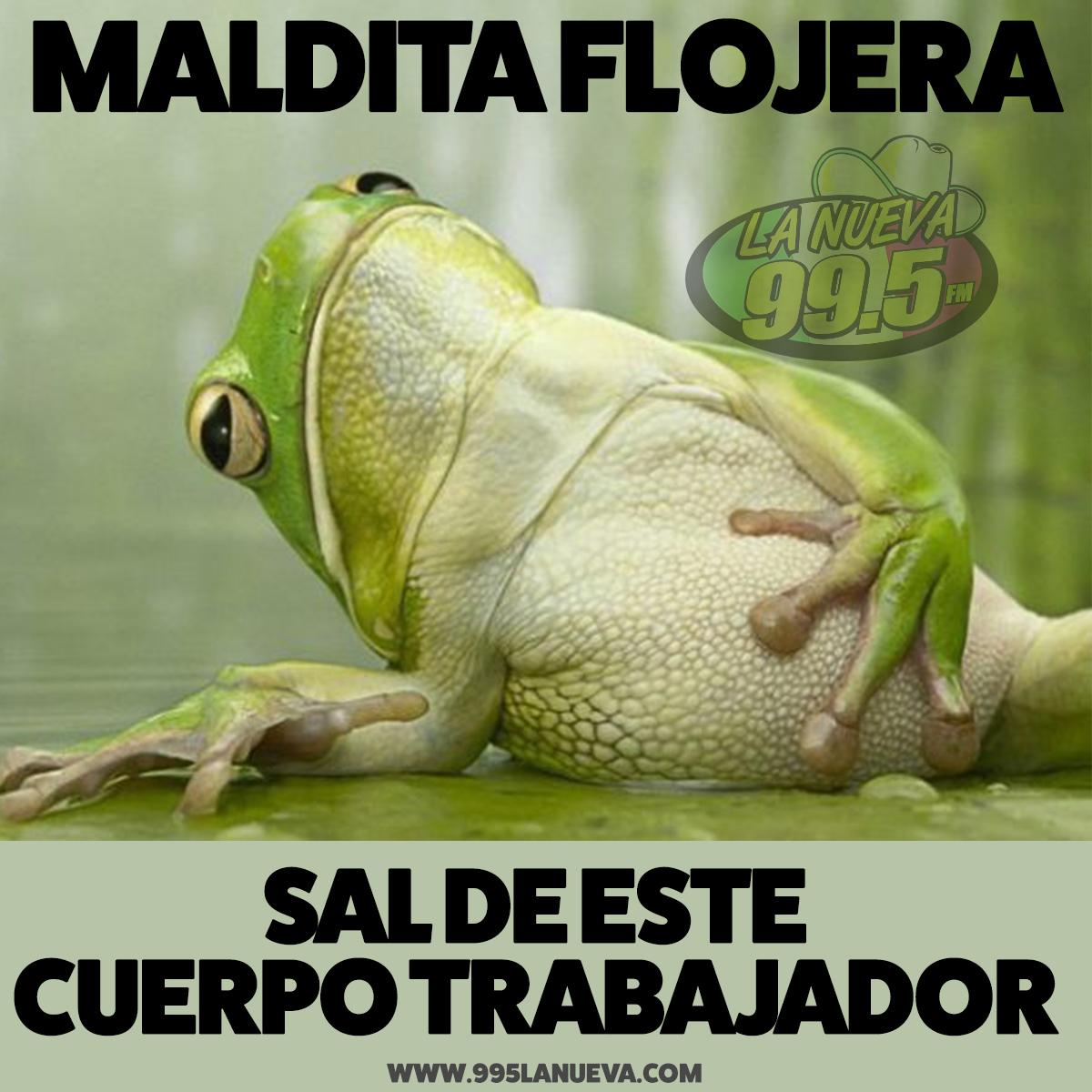 kkps_frog
